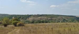 Донецкая лесостепь (окрестности cела Русско-Орловка)