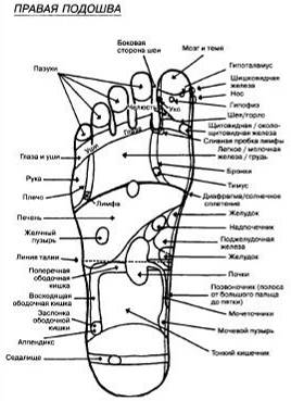 Расположение некоторых выходов энергетических меридианов: правая ступня