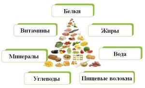 Питание человека